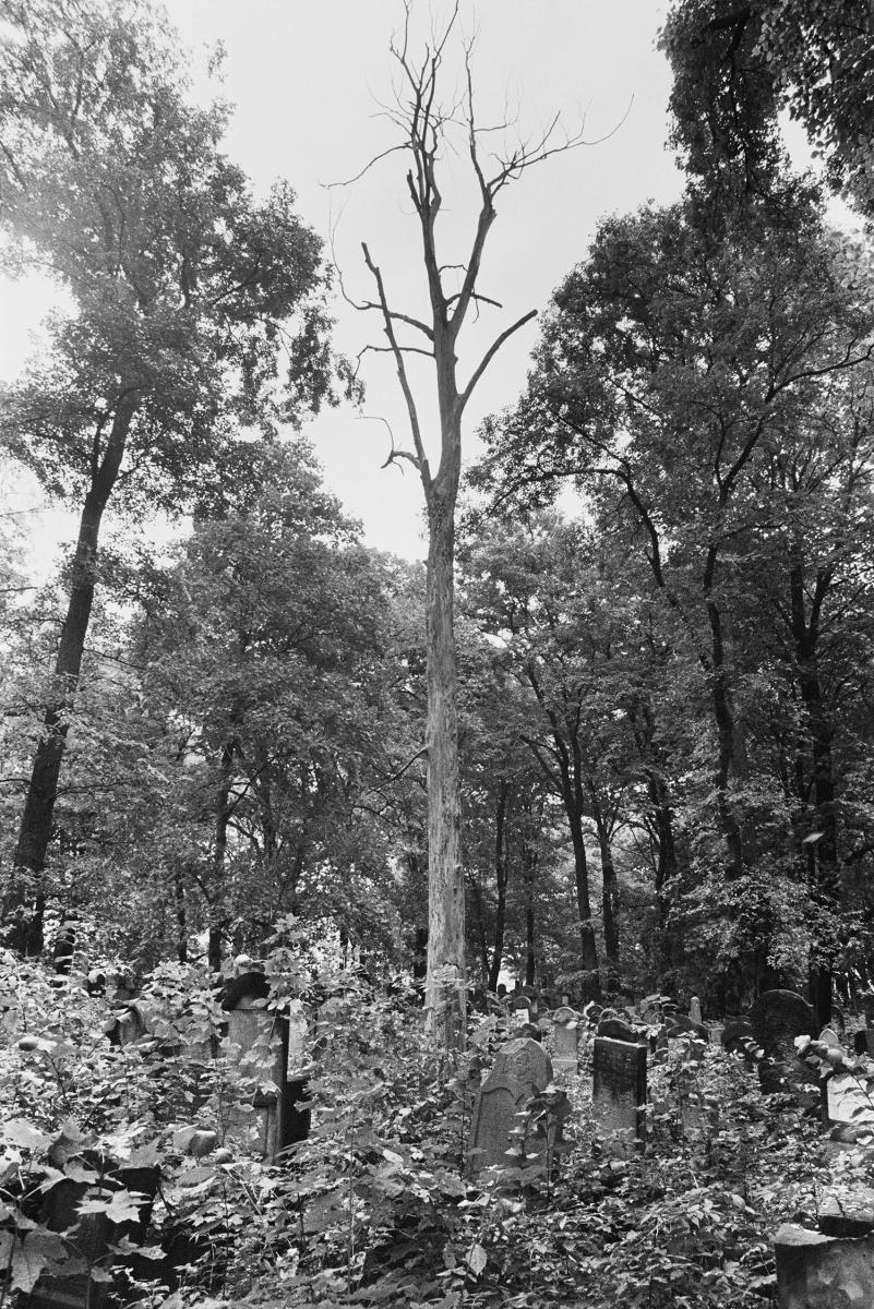 Nowy cmentarz żydowski, Kraków, 1991